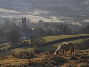 Dartmoor pony above Widecombe-in -the-Moor