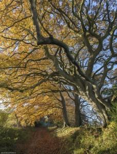 Autumn up Faultson Drove