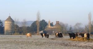 Belties on a frosty morning