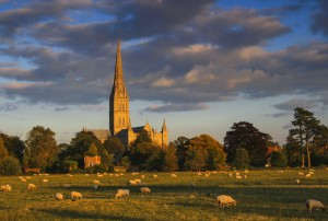 Salisbury Cathedral bathed in autumn light.