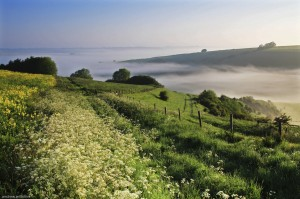 Cow parsley and mist above Pug's Hole Bowerchalke