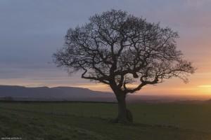 Lone tree at Kildale