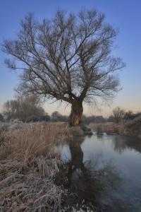 River Ebble at Faulston