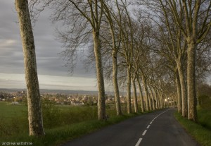 Plane trees on the road to Rabastans