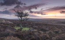 Lone tree on Dunkery Hill